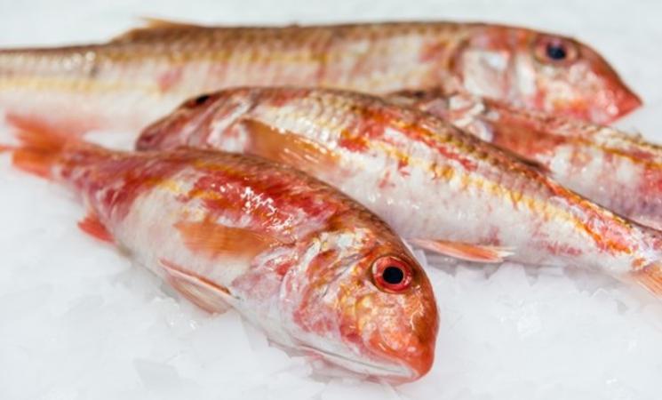 poissonnerie lorient ; Commerce Morbihan; Bretagne sud