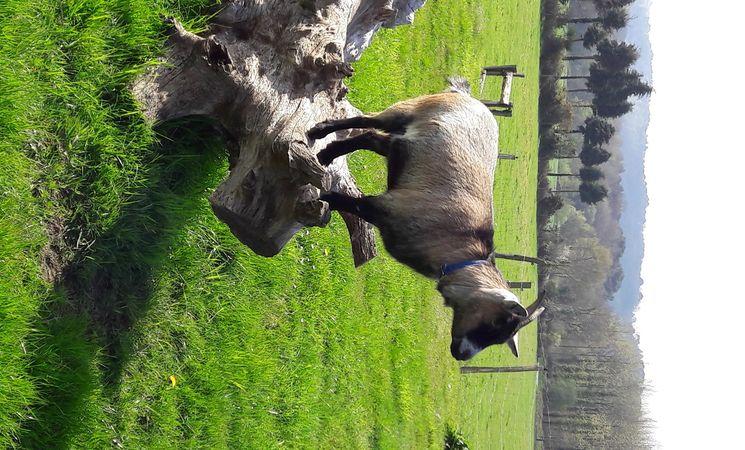 Parc animalier Morbihan ; loisirs Bretagne ; Groix