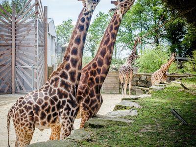 Parc animalier et botanique & Parcabout® de Branféré