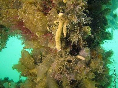Mois de la biodiversité : la biodiversité sous-marine