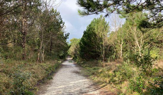 Circuit Entre dunes et forêt