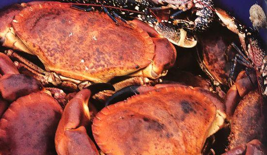 Armement Bescond/ Corail - Vente directe de crustacés